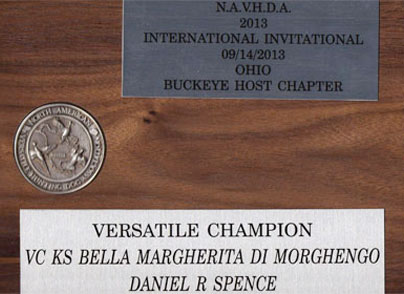 Bella E Bravo Spinone Italiano Hunting Versatile Champion