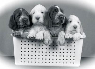 puppies404x294