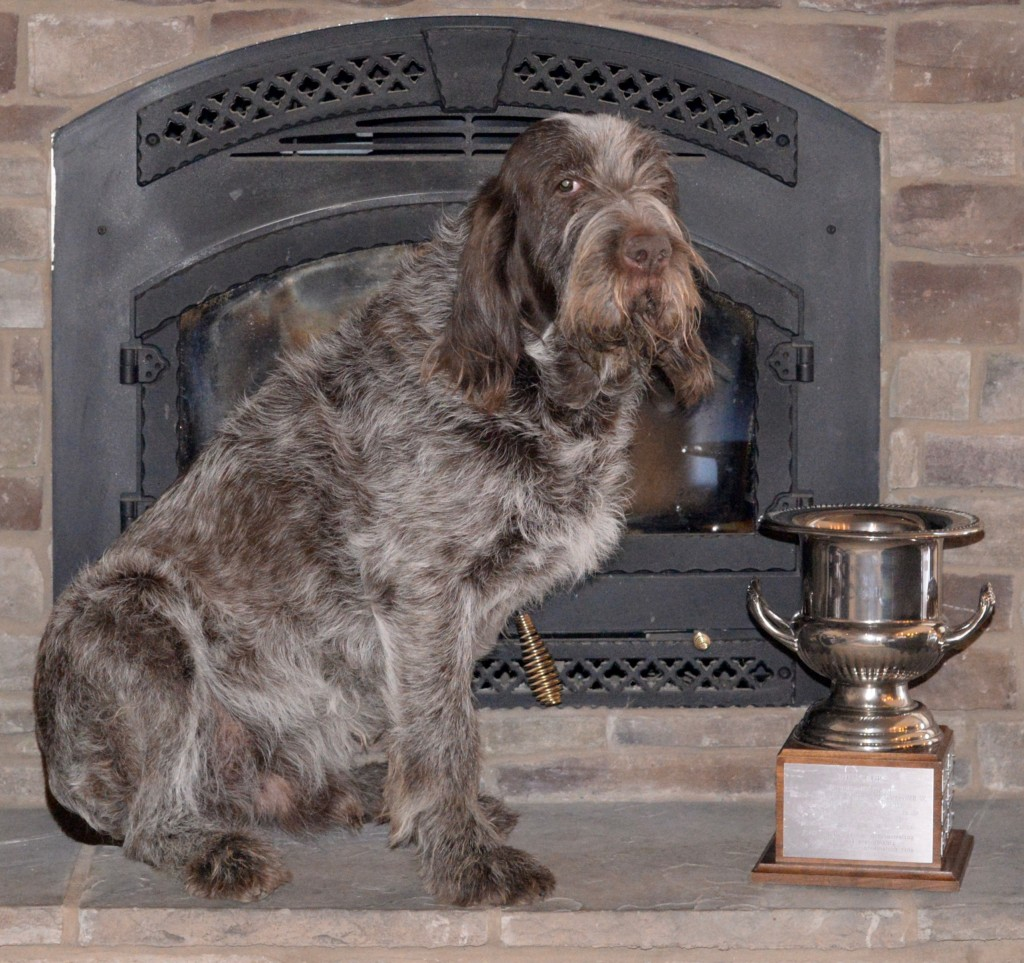 Bruno Rufus Cup